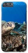 Hawaiian Turtle On Pacific Reef IPhone Case by Dave Fleetham