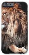 His Majesty IPhone Case by Bill Stephens