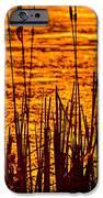 Horicon Cattail Marsh Wisconsin IPhone Case by Steve Gadomski