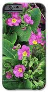 'hose-in-hose' Primroses IPhone Case by Adrian Thomas