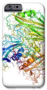 Human Rhinovirus Capsid Proteins IPhone Case by Laguna Design