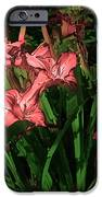 In The Pink IPhone Case by Tom Prendergast