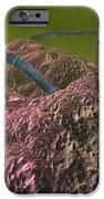 Intestinal Parasites, Artwork IPhone Case by David Mack