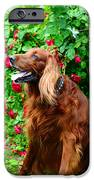 Irish Setter II IPhone Case by Jenny Rainbow