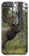 Jasper National Park, Jasper, Alberta IPhone Case by Philippe Widling