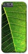 Leaf Texture IPhone Case by Carlos Caetano