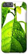 Leaves With Raindrops IPhone Case by Theresa Willingham