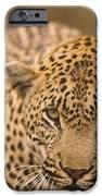 Leopard Panthera Pardus, Arathusa IPhone Case by Stuart Westmorland