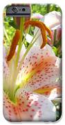 Lily Flowers Floral Prints Photography Orange Lilies IPhone Case by Baslee Troutman