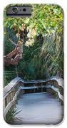 Mahogany Hammock IPhone Case by Kenneth Albin