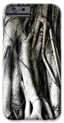 Mangrove Tentacles  IPhone Case by Douglas Barnard