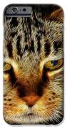 My Bored Cat IPhone Case by Mariola Bitner