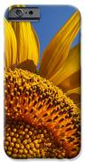 My Pretty IPhone 6s Case by Skip Hunt
