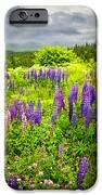 Newfoundland Meadow IPhone Case by Elena Elisseeva