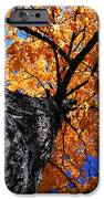 Old Elm Tree In The Fall IPhone Case by Elena Elisseeva