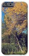 One In A Million IPhone Case by Laurie Search