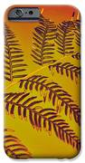Palm Frond In The Summer Heat IPhone Case by Kaye Menner