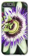 Passion Flower (passiflora Sp.) IPhone Case by Kaj R. Svensson