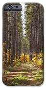 Path Into The Forest In Autumn Sault IPhone Case by Susan Dykstra