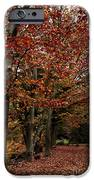 Path Of Leaves IPhone Case by John Rizzuto