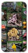 Pennsylvania Mushrooms Collage 2 IPhone Case by Mother Nature