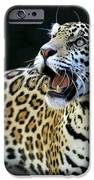 Play With Me IPhone Case by Sabrina L Ryan