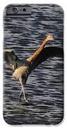 Prancing Heron IPhone Case by David Lee Thompson