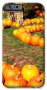 Pumpkin Patch Path IPhone Case by Carol Groenen