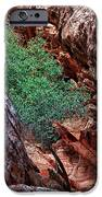 Red And Green IPhone Case by Rick Berk