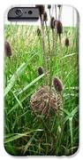 Red-winged Blackbird Nest IPhone Case by J McCombie