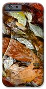 River Leaves IPhone Case by LeeAnn McLaneGoetz McLaneGoetzStudioLLCcom
