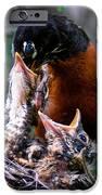 Robin Feeding Young 1 IPhone Case by Terry Elniski