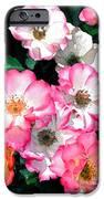 Rose 133 IPhone Case by Pamela Cooper