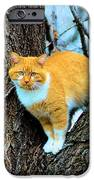 Rudy The Escape Artist IPhone Case by Cheryl Poland