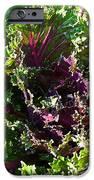 Salad Maker IPhone Case by Susan Herber
