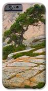 Schoodic Cliffs IPhone Case by Brent L Ander