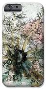 Sea Cucumber And Starfish IPhone Case by Georgette Douwma
