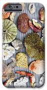 Sea Treasures IPhone Case by Elena Elisseeva