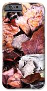Seasons Change IPhone Case by John Rizzuto