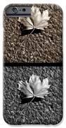 Seasons Of Change IPhone Case by Luke Moore