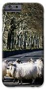 Sheep On The Road, Torr Head, Co IPhone Case by The Irish Image Collection