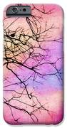 Singing In The Sunshine IPhone Case by Judi Bagwell