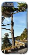 Somes Sound Maine IPhone Case by John Greim