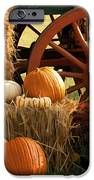 Southern Harvestime Display IPhone Case by Kathy Clark