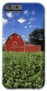 Soybean Field And Red Barn Near Anola IPhone Case by Dave Reede