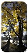 Spirit By The Lake IPhone Case by Rob Travis