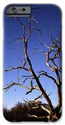 Spooky Tree IPhone Case by Larry Ricker