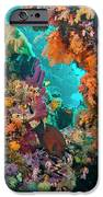 Spotted Goldring Surgeonfish And Coral IPhone Case by Beverly Factor