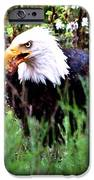 Stay Away From My Dinner IPhone Case by Don Mann
