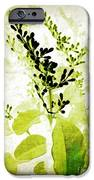 Study In Green IPhone 6s Case by Judi Bagwell